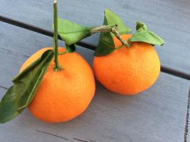00-Mandarinas